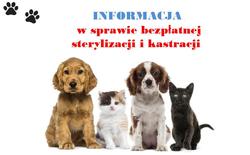 Informacja w sprawie darmowej sterylizacji i kastracji