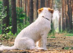 Podzamcze: znaleziono brązowego psa