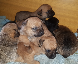 Siedem szczeniaczków poszukuje domu