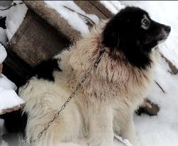 Reaguj na zwierzęta podczas zimy