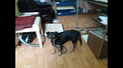 PILNE: Znaleziono psa
