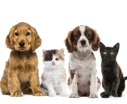 Bezpłatna sterylizacja i kastracja zwierząt